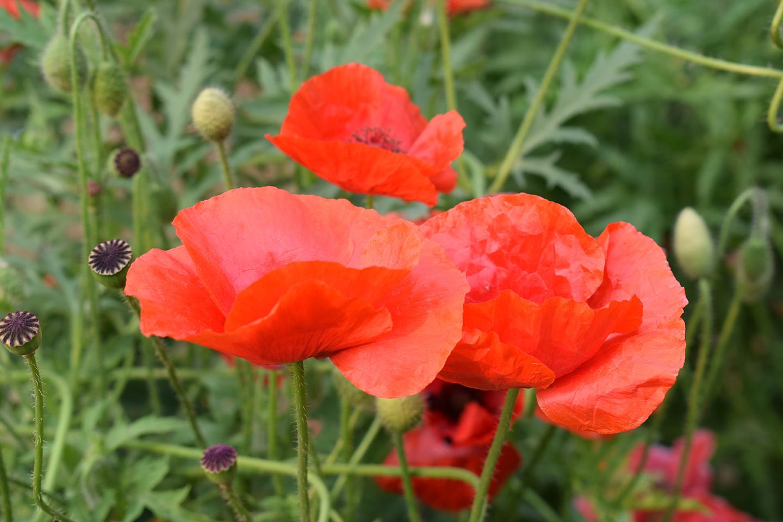Flower in ISI garden